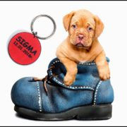 puppy-1154468_960_7207